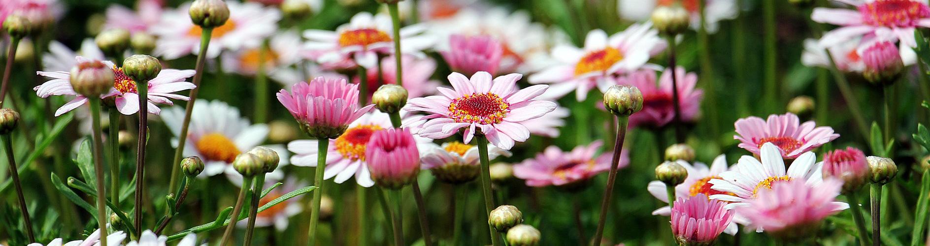 Rencontres échange de Plantes vivaces, de bons conseils de jardiniers et de sourires autour d'un café-gâteau à la maison des jeunes et de la culture